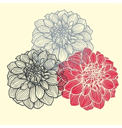 Hand-drawn flowers of dahlia vector