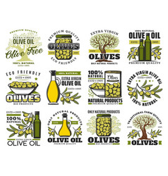 olive oil bottle green fruit tree branch icons vector image