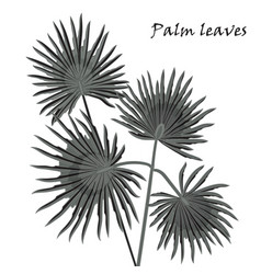 Silhouette tropical palm leaves black isolated on vector