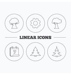 Tree oak-tree and christmas tree icons vector