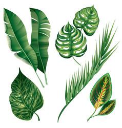 Realistic tropical botanical foliage plants set vector