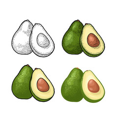 half avocado with seed vintage engraving vector image