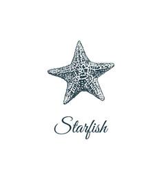 Starfish skech starfish hand drawing vector