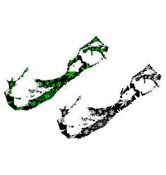 Bermuda - map is designed cannabis leaf vector