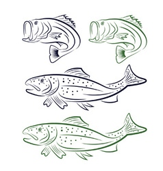 Big mouth bass and trout set vector