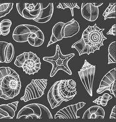 Collection of seashells drawn vector