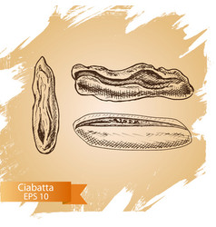 sketch - bakery ciabatta vector image