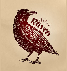 Vintage drawn raven crow bird sketch vector