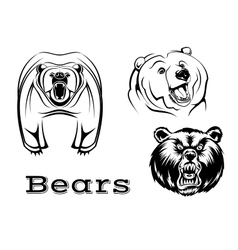 Angry grizzly bears characters vector image