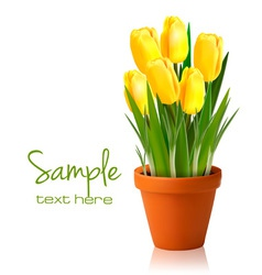 fresh spring yellow flowers vector image
