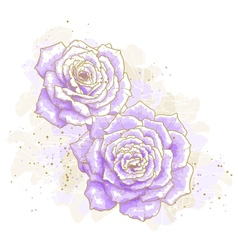 Violet roses on white background vector image vector image