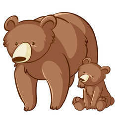 Bear and cub on white background vector