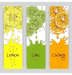 Citrus fruit banners vector