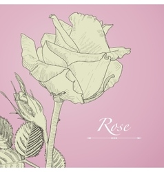 Hand drawn blomming rose with bud Isolated vector image