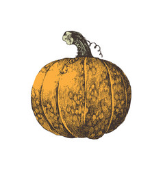hand drawn colorful pumpkin isolated on white vector image