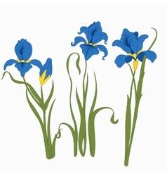 Set three irises isolated on white background vector