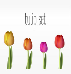 realistic tulips set vector image vector image