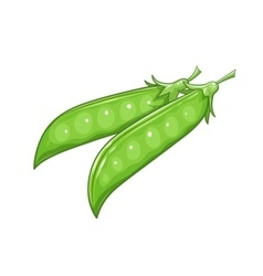 Pods of pea vector image vector image