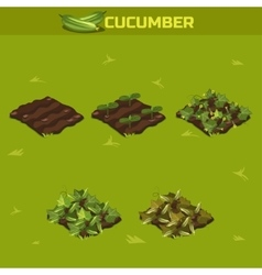 SET 3 Isometric Stage of growth Cucumber vector image vector image