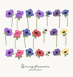 hand drawn anemones spring flowers set garden vector image
