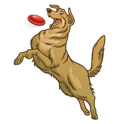 happy golden retriever dog playing frisbee vector image