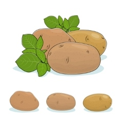 Potato Vegetable Edible Fruit vector image