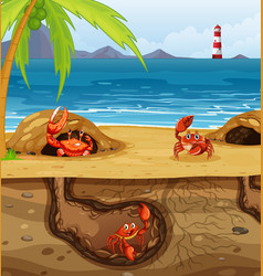 underground animal hole with many crabs vector image