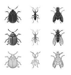 Design of insect and fly symbol set of vector