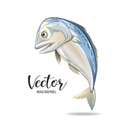 mackerel fresh popular food in thailand vector image