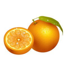 ripe orange fruits 3d citrus slices sweet food vector image