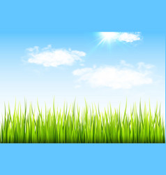 spring background with green grass vector image