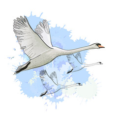 drawing flying flock swans with vector image