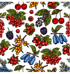 garden and forest berries sketch pattern vector image