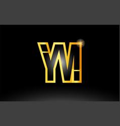 Gold black alphabet letter ym y m logo vector