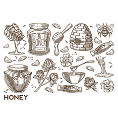 Honey production beekeeping items apiary vector