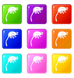 Marmoset monkey icons 9 set vector