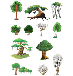 Trees and woods vector