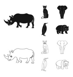 Black rhinoceros panther wild cat african animal vector