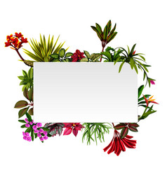 frame botanical nature with the flowers accents vector image