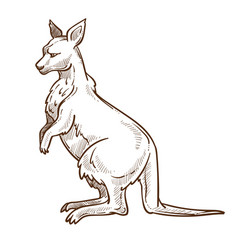 Kangaroo or wallaisolated sketch australian vector