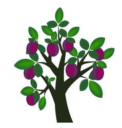 Plum tree vector