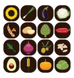 set of different kinds of vegetables vector image