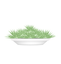 Small Palm Trees in A Flower Pot vector image