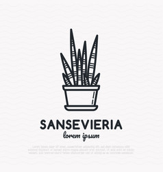 succulent sansevieria in pot thin line icon vector image