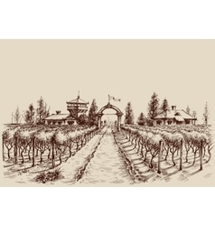 Vineyard drawing etch style Farm entrance and vine vector