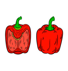 pepper drawing isolated on white background vector image vector image