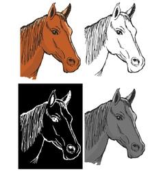 bay horse vector image