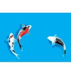 Three carps on blue vector image