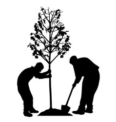two men planting a tree vector image