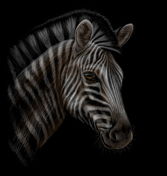 zebra color realistic hand-drawn portrait vector image